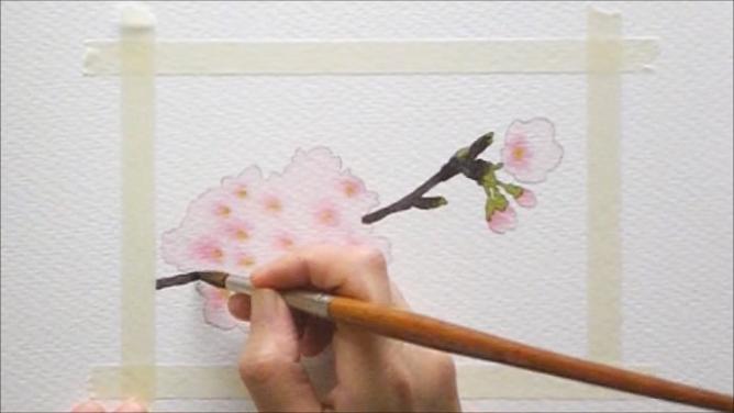 桜 塗り絵手順7