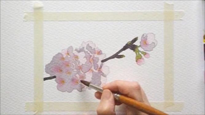 桜 塗り絵手順9